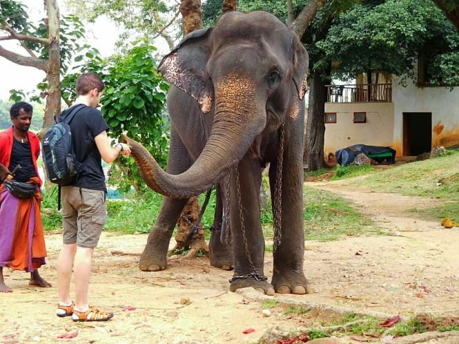 2017-02-sri-lanka-habarana-paseo-elefante-4