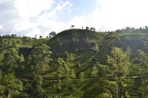 Nuwara Eliya - Tea Factory