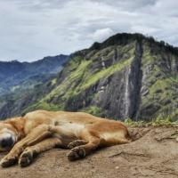 Sri Lanka 2017 - Etapa 2 - Las Montañas y El Hype de Ella