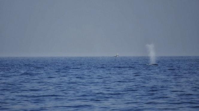 2017-03-sri-lanka-mirissa-ballenas-1