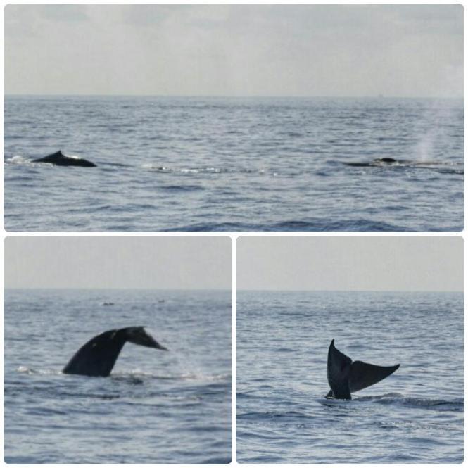 2017-03-sri-lanka-mirissa-ballenas-9.jpg