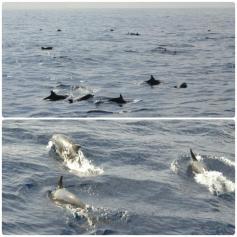 Mirissa - Delfines