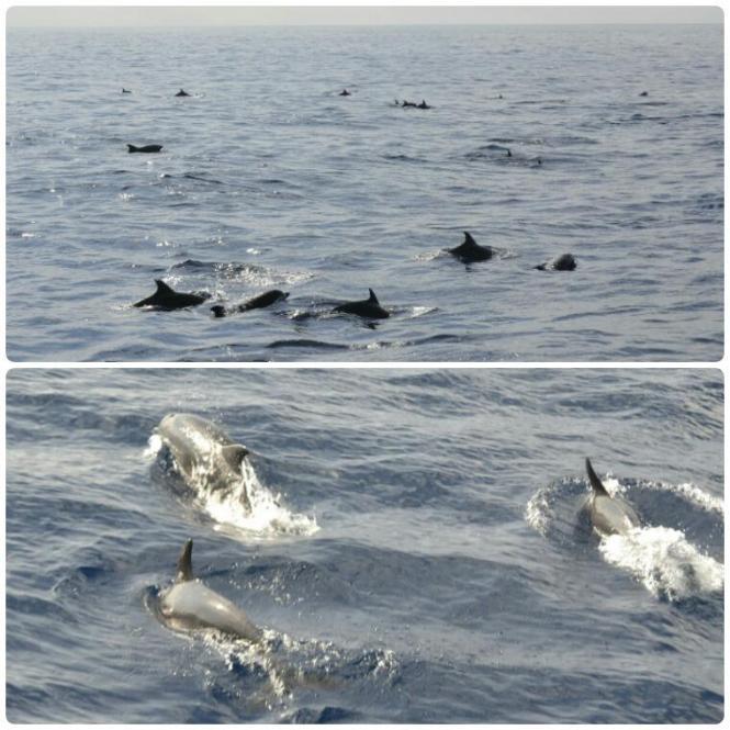 2017-03-sri-lanka-mirissa-delfines