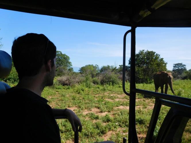 2017-03-sri-lanka-udawalawe-safari-30-elefantes.JPG