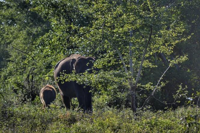 2017-03-sri-lanka-udawalawe-safari-33-elefantes.jpeg