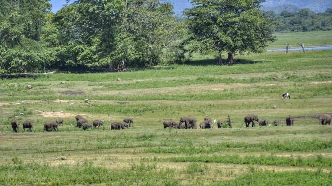 2017-03-sri-lanka-udawalawe-safari-35-orfanato-elefantes.jpeg