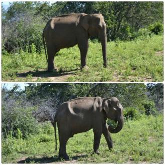 Safari en Udawalawe