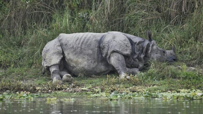2017-03-nepal-Chitwan-canoa-3-rinoceronte.jpeg