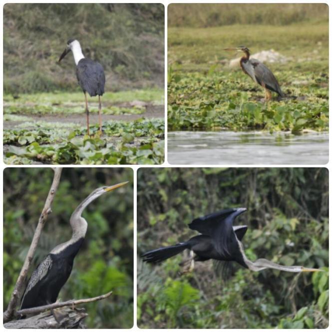 2017-03-nepal-Chitwan-canoa-5-aves