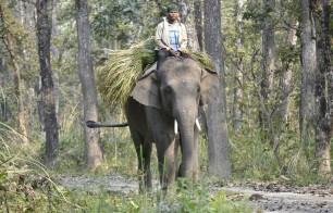 Chitwan - Elefante