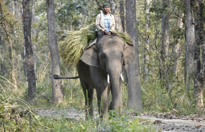 2017-03-nepal-Chitwan-jungle-walk-dia-1-07-elefante