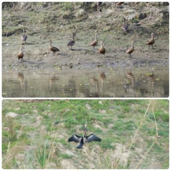 Chitwan - Aves