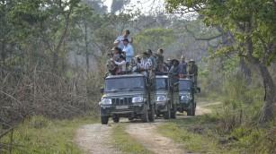 Chitwan - Jeeps