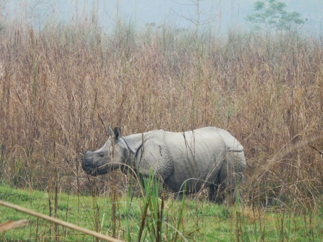 2017-03-nepal-Chitwan-jungle-walk-dia-2-1-rinoceronte
