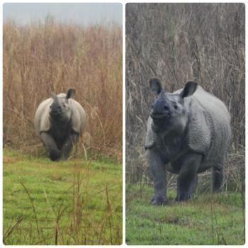 2017-03-nepal-Chitwan-jungle-walk-dia-2-2-rinoceronte