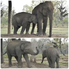 Chitwan - Elephant Breeding Center