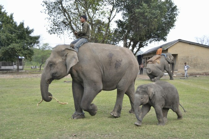 2017-03-nepal-Chitwan-Sauraha-elephant-breeding-center-3.jpeg