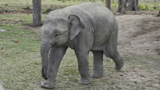 2017-03-nepal-Chitwan-Sauraha-elephant-breeding-center-4.jpeg