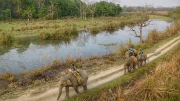 Chitwan - Elefantes