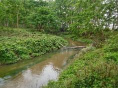 Chitwan - Jungla