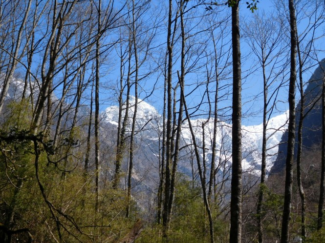 2017-03-nepal-Trekking-LGH-Dia-2-02-bosque.JPG
