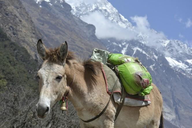 2017-03-nepal-Trekking-LGH-Dia-2-17-Ghodatabela