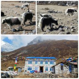 Trekking Langtang-Gosaikunda-Helambu - Kyanjin Gumba
