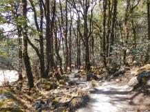 Trekking Langtang-Gosaikunda-Helambu - Bosque cerca de Lama Hotel