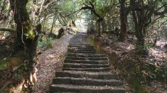 Trekking Langtang-Gosaikunda-Helambu - Llegando a Sundarijal