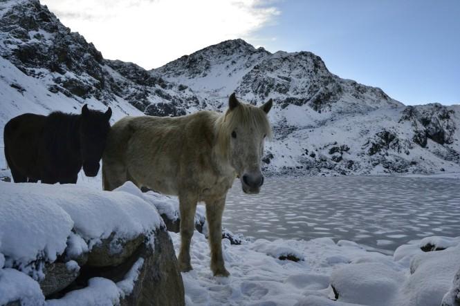 2017-04-nepal-trekking-LGH-dia-9-02-gosaikunda-nevado