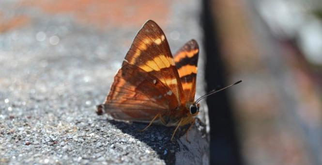 2017-03-nepal-mariposa.JPG