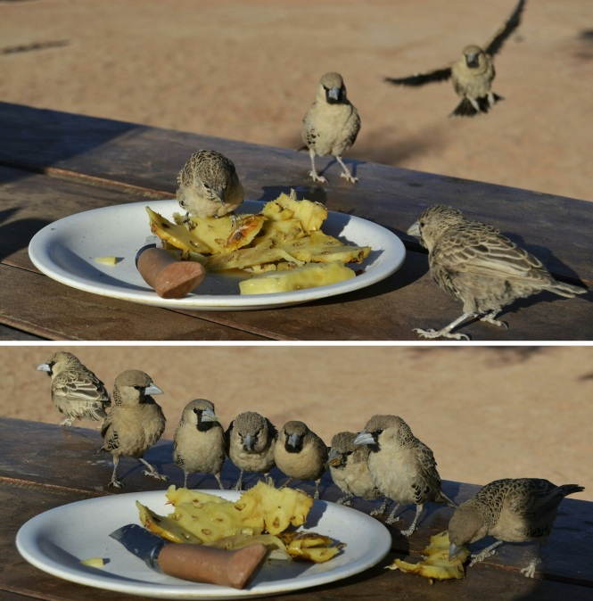 2017-06-namibia-sesriem-campsite-4.jpeg