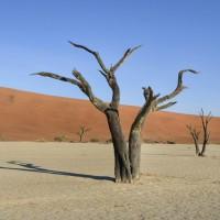 Namibia 2017 - Etapa 1 - Sesriem y El Desierto Color Albaricoque