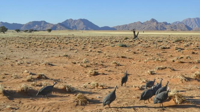 2017-06-namibia-sesriem-sossusvlei-lodge-4.jpeg
