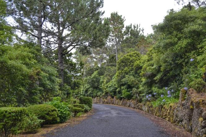 2017-07-azores-pico-carretera