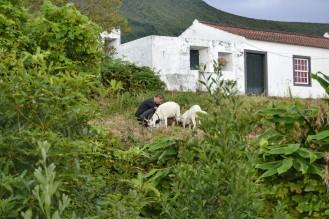 Cabras de Pico
