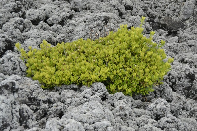 2017-07-azores-pico-misterios-do-sul-10-verde-negro