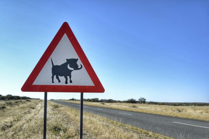 2017-06-namibia-carretera-c22-warthog-1.jpeg
