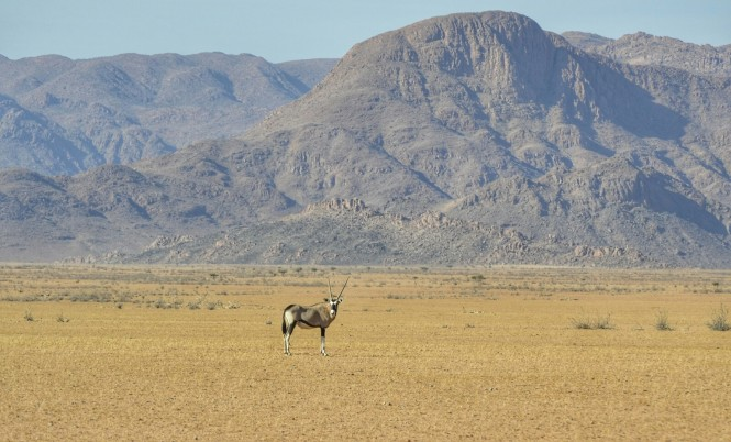 2017-06-namibia-luderitz-camino-desde-sesriem-2-oryx.jpeg