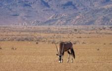Oryx en Sesriem