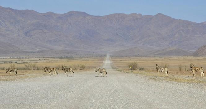 2017-06-namibia-luderitz-camino-desde-sesriem-4-cebras.jpeg
