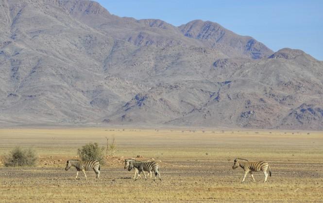 2017-06-namibia-luderitz-camino-desde-sesriem-5-cebras.jpeg
