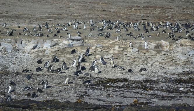 2017-06-namibia-luderitz-halifax-island-pinguinos-del-cabo-1.jpeg