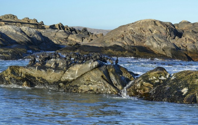 2017-06-namibia-luderitz-halifax-island-pinguinos-del-cabo-3-cormoranes.jpeg