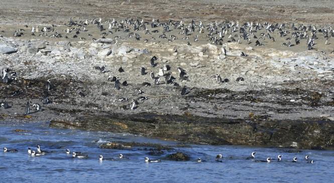 2017-06-namibia-luderitz-halifax-island-pinguinos-del-cabo-4.jpeg
