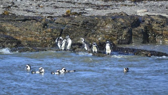2017-06-namibia-luderitz-halifax-island-pinguinos-del-cabo-5.jpeg