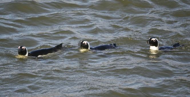2017-06-namibia-luderitz-halifax-island-pinguinos-del-cabo-7.jpeg