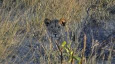 Leona en Mahango