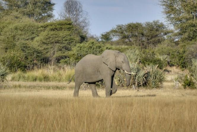 2017-06-namibia-safari-mahango-20-elefante.jpeg