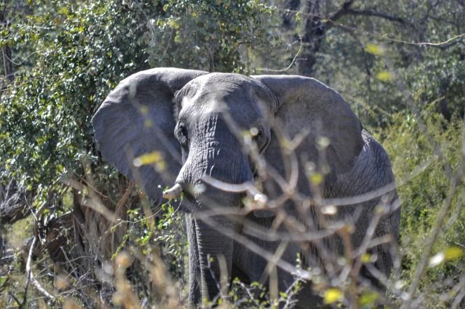 2017-06-namibia-caprivi-buffalo-core-area-elefante-1.jpeg